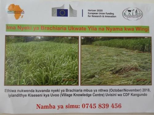 Brachiaria upscaling poster