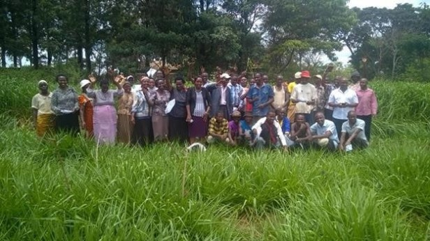 Youth and women shown Brachiaria in Kimbimbi, Kirinyaga