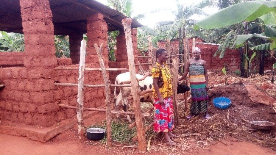 Rwanda PIP member showing improved cowshed based off PIP actions