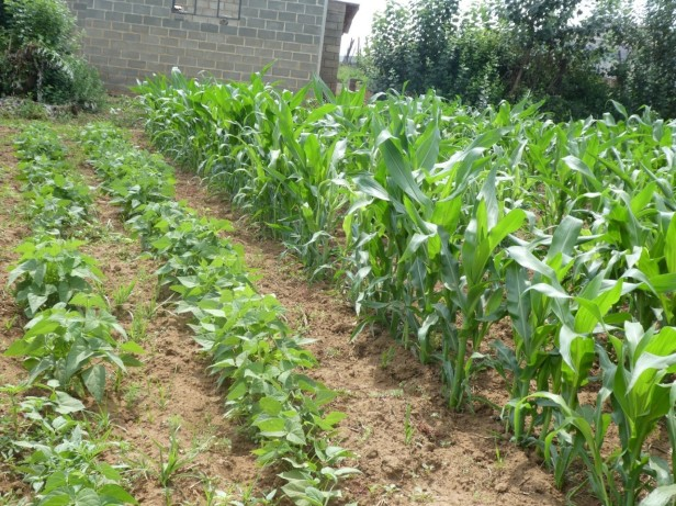 Review paper accepted in African Journal of Agricultural Science